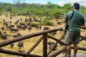 Khám phá Vườn quốc gia Kruger Nam Phi