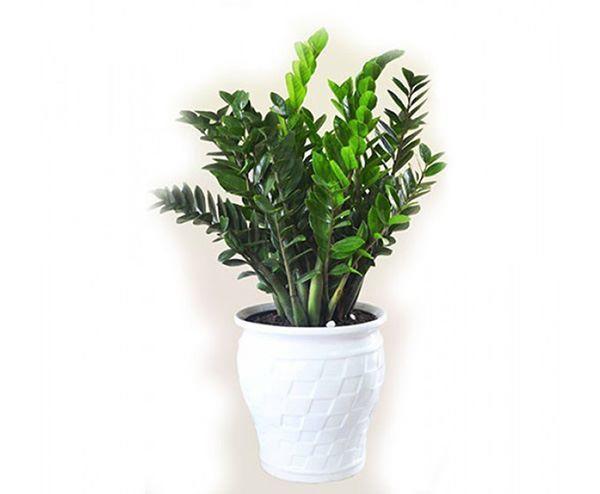 Những loại cây 'ăn tiền thiên hạ', sáng đặt phòng khách chiều gặp may