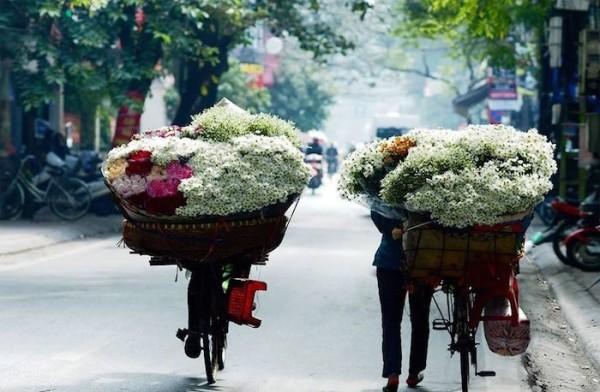 Vẻ đẹp tinh khôi của cúc họa mi những ngày đầu đông Hà Nội